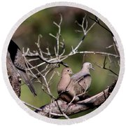 Siesta Time - Mourning Dove Round Beach Towel