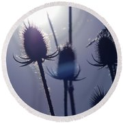 Silhouette Of Weeds Round Beach Towel
