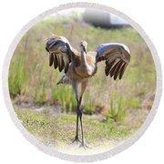 Silly Sandhill Crane Chick Round Beach Towel