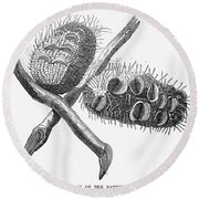 Silver Banksia Seeds Round Beach Towel