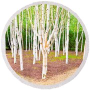 Silver Birch Trees Round Beach Towel