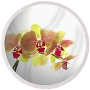 Simplified Orchids II Round Beach Towel