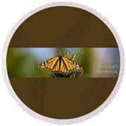 Single Monarch Butterfly Round Beach Towel