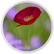 Single Red Poppy  Round Beach Towel