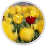 Single Red Tulip Among Yellow Tulips Round Beach Towel