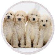 Six Labradoodle Pups Round Beach Towel