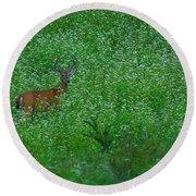 Six Point Deer In Wildflowers Round Beach Towel