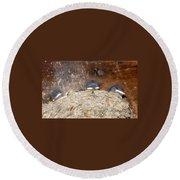 Sleeping Barn Swallows Round Beach Towel