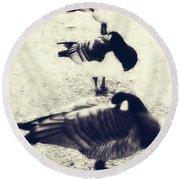 Sleeping Ducks Round Beach Towel by Joana Kruse