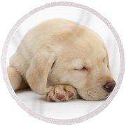 Sleepy Labrador Pup Round Beach Towel