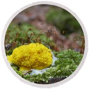Slime Mould Round Beach Towel