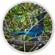 Small Blue Jay Of California Round Beach Towel