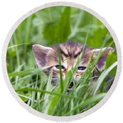 Small Kitten In The Grass Round Beach Towel
