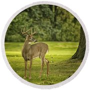 Small Stag Round Beach Towel
