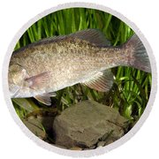Smallmouth Bass Micropterus Dolomieu Round Beach Towel
