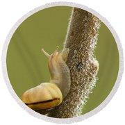 Snail In Dew Round Beach Towel