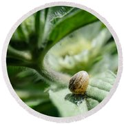 Snail On The Leaf Round Beach Towel