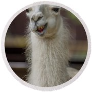 Snickering Alpaca Round Beach Towel