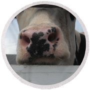 Sniffing Cow Round Beach Towel