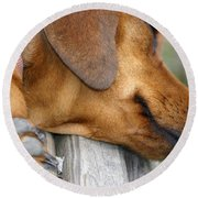 Sniffing Out Dreams Round Beach Towel