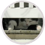 Snoozing On The Porch Round Beach Towel