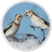 Snow Buntings And Ice Round Beach Towel