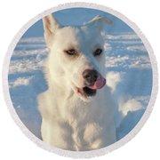 Snow Dog 0249 Round Beach Towel