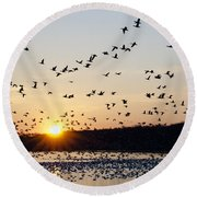 Snow Geese At Sunrise Round Beach Towel