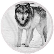 Snow Wolf Round Beach Towel