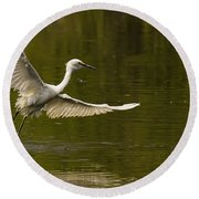 Snowy Egret Fishing In Florida Round Beach Towel