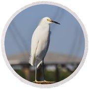Snowy Egret Stare Down Round Beach Towel