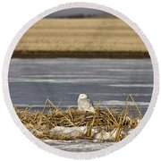Snowy Owl Perched Frozenpond Round Beach Towel