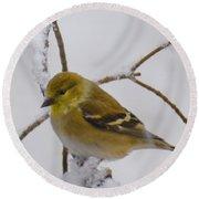 Snowy Yellow Finch Round Beach Towel