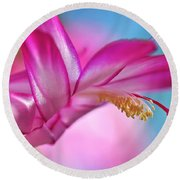 Soft And Delicate Cactus Bloom Round Beach Towel