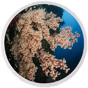 Soft Coral On The Liberty Wreck, Bali Round Beach Towel