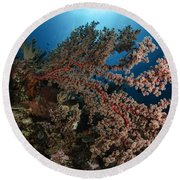 Soft Coral Reef Seascape, Indonesia Round Beach Towel