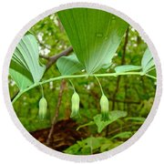 Solomon's Seal Wildflower - Polygonatum Commutatum Round Beach Towel