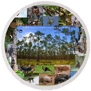 Southeastern Pine Forest Wildlife Poster Round Beach Towel