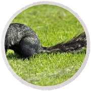 Southern Fox Squirrel Round Beach Towel by Phill Doherty