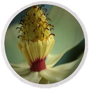 Southern Magnolia Flower Round Beach Towel