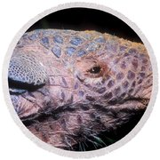 Southern Naked-tail Armadillo Round Beach Towel