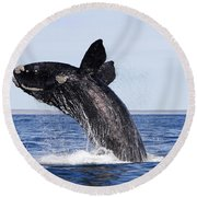 Southern Right Whale Round Beach Towel