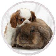 Spaniel Puppy And Rabbit Round Beach Towel