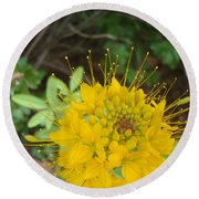 Yellow Bee Plant Sparks Round Beach Towel