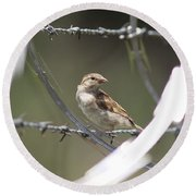 Sparrow - Protected By Razor Wire Round Beach Towel