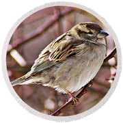 Sparrow II Round Beach Towel