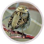 Sparrow IIi Round Beach Towel
