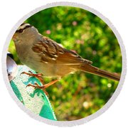 Sparrow In Morning Light  Round Beach Towel