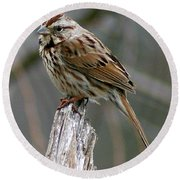Sparrow Iv Round Beach Towel