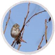 Sparrow On Blue Round Beach Towel